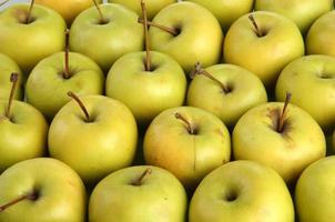 pommes juteuses, gros plan photo