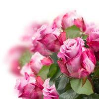 fleurs roses se bouchent photo