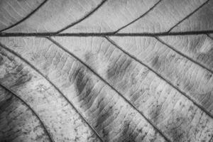 fermé les feuilles séchées photo