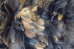 gros plan, plume poulet photo