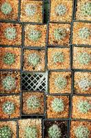 fermer de nombreux cactus