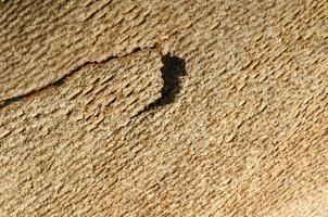 croûte d'arbre bouchent