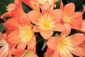 fleur gros plan 14