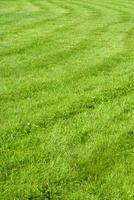 gros plan, herbe verte photo