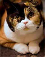chat bouchent photo