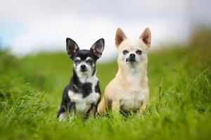 chiens de race pure photo