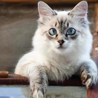 animal chat photo