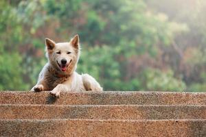 chien blanc moelleux photo