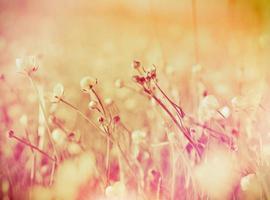fleurs de printemps (renoncule)
