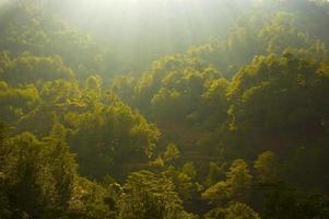 des arbres photo