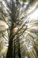 baum - arbre