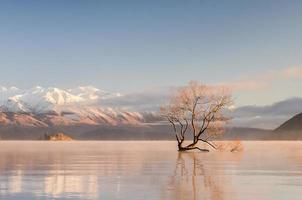 arbre solitaire photo