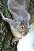 écureuil haut photo