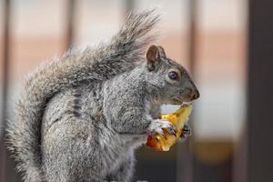 écureuil photo