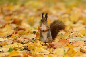 écureuil assis sur l'herbe