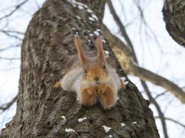 écureuil dans gorky park