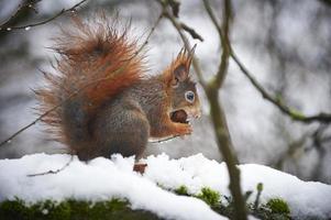 alimentation d'hiver photo