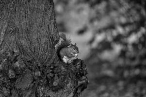 écureuil avec écrou