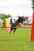 agilité chien photo