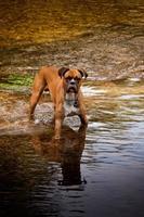 hund im bach photo