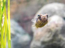 poisson-globe photo