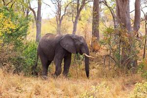 elefant photo