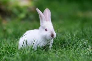 lapin dans l'herbe photo