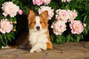 chien en fleurs