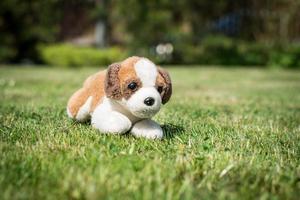 chien jouet photo