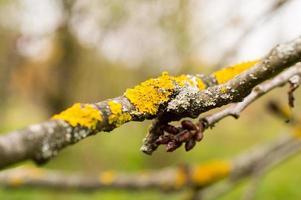 lichen sur arbre photo