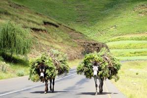 deux ânes photo