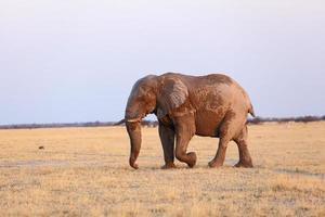 taper l'éléphant