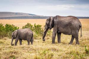 animaux au Kenya