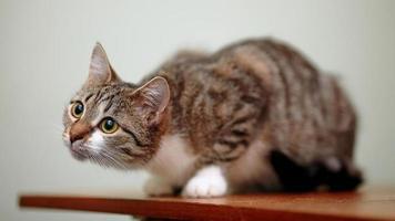 rayé de blanc un chat. photo