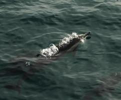 bulles de lion de mer photo