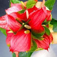 Flamant rose en culture thaïlandaise, fond noir