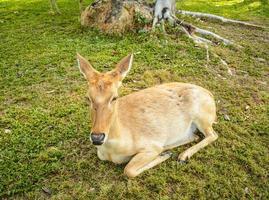 antilope. photo