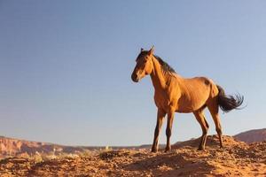 cheval sauvage.