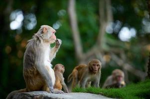 deux singes et leur bébé photo