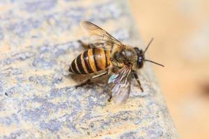 bouchent abeille sur le terrain