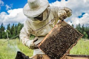 l'apiculteur travaille avec des abeilles et des ruches sur le rucher. photo