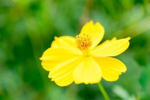 insecte sur une belle fleur photo