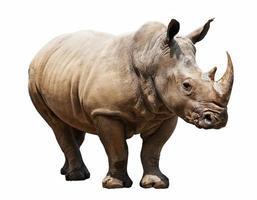 rhinocéros sur fond blanc photo