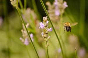abeille fleur photo