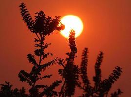 bourdon sur leadplant au coucher du soleil photo