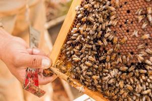 cadre en bois en nid d'abeille photo