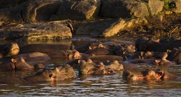 piscine d'hippopotame photo