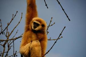 singe sur l'arbre