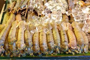 crevettes mantes avec de la glace ..