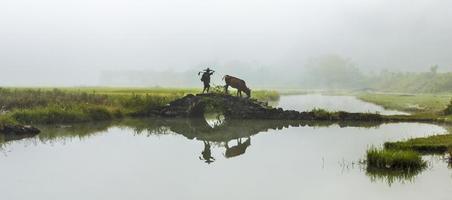 agriculteur avec des vaches photo